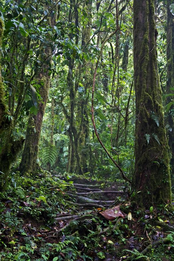 costa rica rain forest 3 12-63