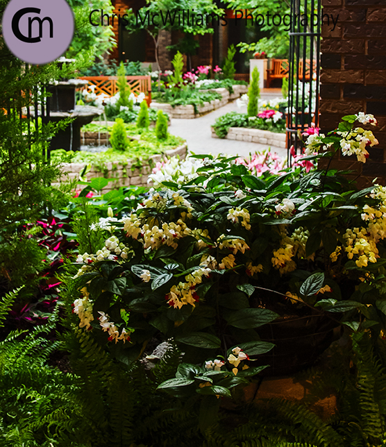 conservatory 4 14-13sm