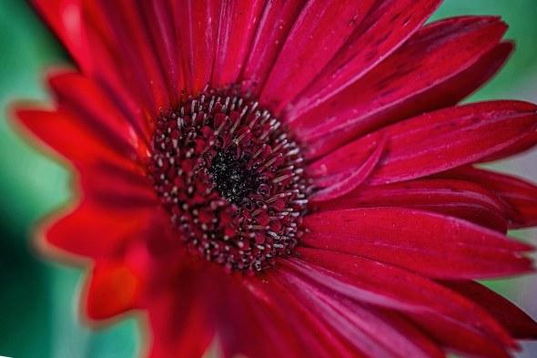 lillies-14