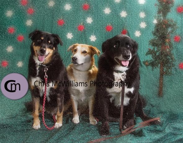 dogs-11-16-4asm