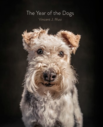 the-year-of-the-dogs