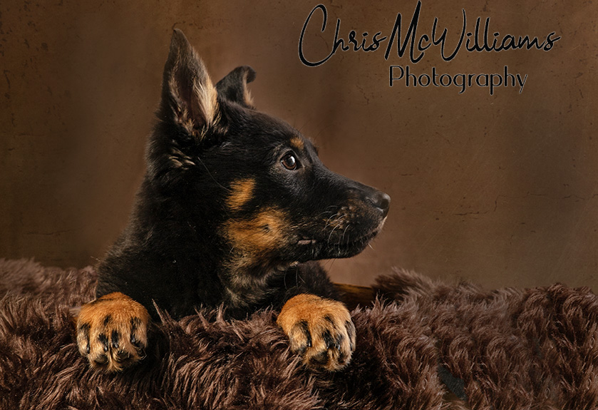 Narol, Mb. Photographers of dogs