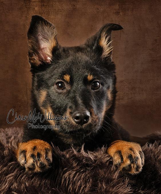 Winnipeg Puppy Photographers