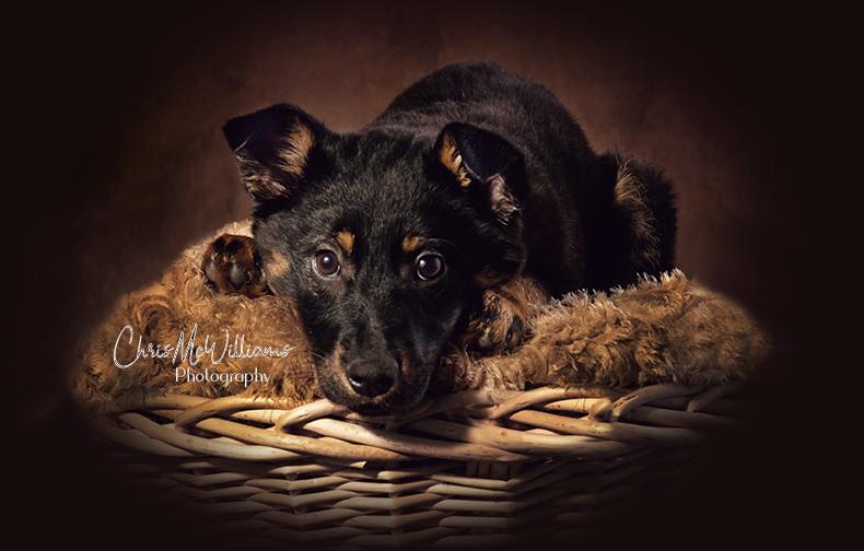 Cutest Puppy Photographers Winnipeg